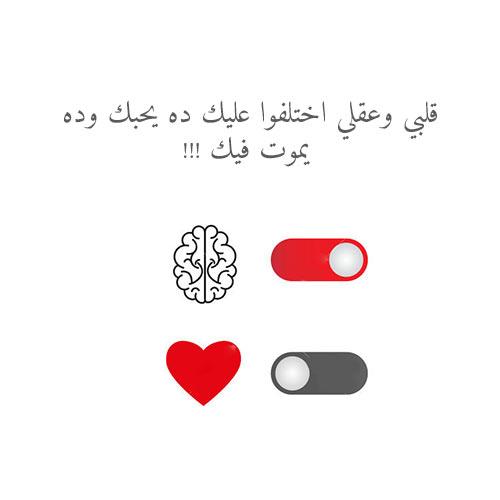 قلبي عقلي يحبك